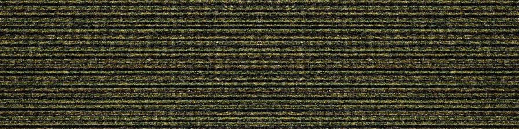 tivoli multiline 21202 pacific green carpet plank